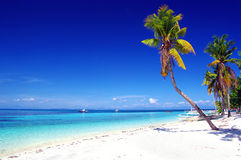 热带的节假日 库存图片