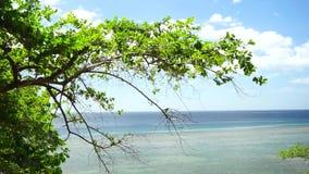 热带的节假日 股票视频