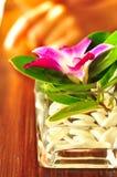 热带的花 免版税库存图片