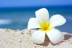 热带的花 免版税库存照片