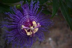 热带的花 库存图片