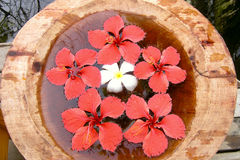 热带的芳香 免版税库存照片