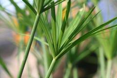 热带的蕨 免版税图库摄影