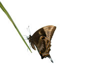 热带的蝴蝶 图库摄影