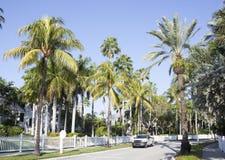热带的街道 图库摄影