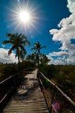 热带的路径 免版税库存照片