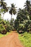 热带的路 库存图片
