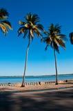 热带的路 库存照片