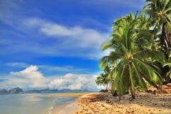 热带的逃走 库存照片