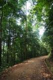 热带的雨林 图库摄影