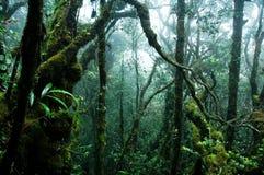 热带的雨林 免版税库存照片