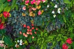 热带的雨林 库存照片