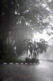 热带的雨 免版税库存照片