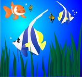 热带的鱼 库存照片