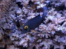 热带的鱼 免版税图库摄影