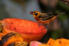热带的鸟 免版税库存照片