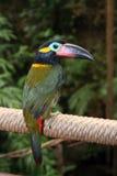 热带的鸟 免版税库存图片