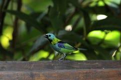 热带的鸟 免版税图库摄影