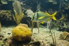 热带的水族馆 库存图片