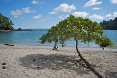 热带的结构树 免版税图库摄影