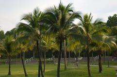 热带的结构树 免版税库存照片