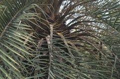 热带的结构树 库存图片