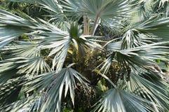 热带的结构树 库存照片
