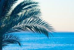 热带的palmtree 库存照片