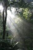 热带破晓的森林 库存图片