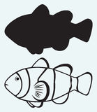热带礁石鱼 库存图片
