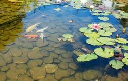 热带禅宗庭院 免版税库存照片