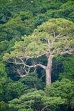 热带空中的密林 免版税库存图片