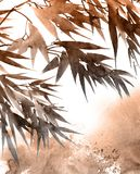 热带竹子叶子 免版税图库摄影