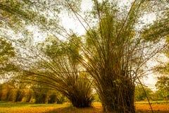热带竹庭院 图库摄影
