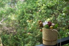 热带篮子的果子 免版税库存图片