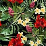 热带红色百合、羽毛和普罗梯亚木花无缝的样式与鲜绿色的叶子在黑背景 库存例证