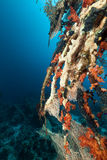 热带红色礁石的海运 免版税库存照片