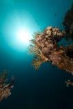 热带红色礁石的海运 库存照片