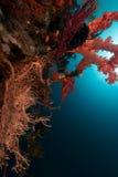 热带红色礁石的海运 库存图片