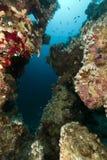 热带红色礁石的海运 免版税库存图片