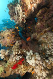 热带红色礁石的海运 免版税图库摄影
