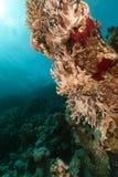 热带红色礁石的海运 图库摄影