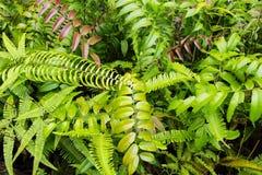 热带绿叶顶视图特写镜头照片 与绿色蕨叶子的热带叶子 库存图片