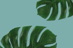 热带绿色叶子的图表构成 免版税库存图片