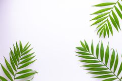 热带绿色叶子的样式在白色背景的   库存例证