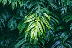 热带绿色叶子,自然夏天森林植物 免版税库存照片