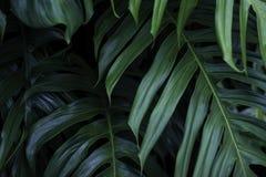 热带绿色叶子,自然夏天森林植物 免版税库存图片