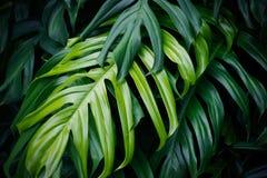 热带绿色叶子,自然夏天森林植物 免版税图库摄影