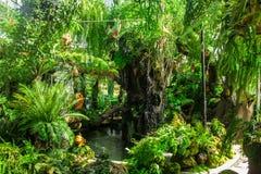 热带绿色庭院 免版税库存图片