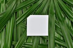 热带绿色留给背景纸框架拷贝空间在中心,自然样式概念 免版税库存图片